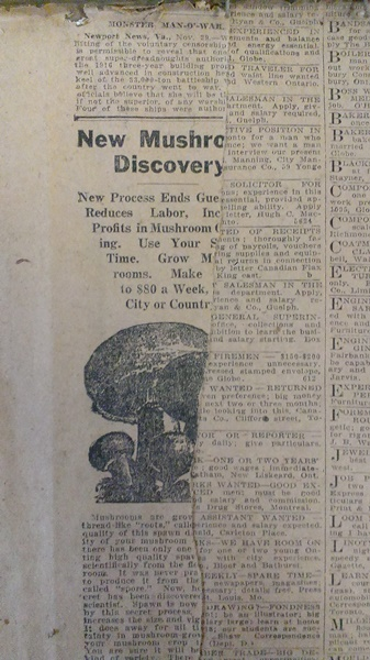 Ripped newspaper page about new mushroom discovery