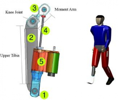 Diagram of the prosthetic leg