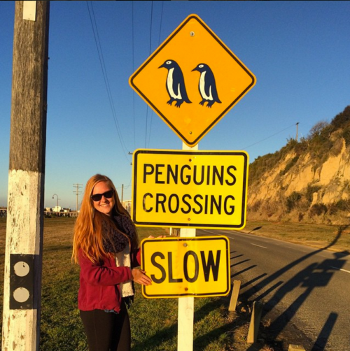 penguins crossing signs states slow down in New Zealand