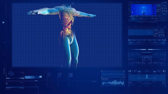 Computer model of the human body