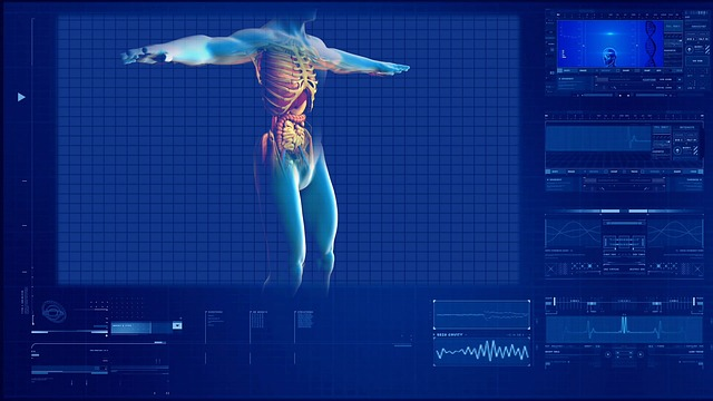 Computational model of human organs