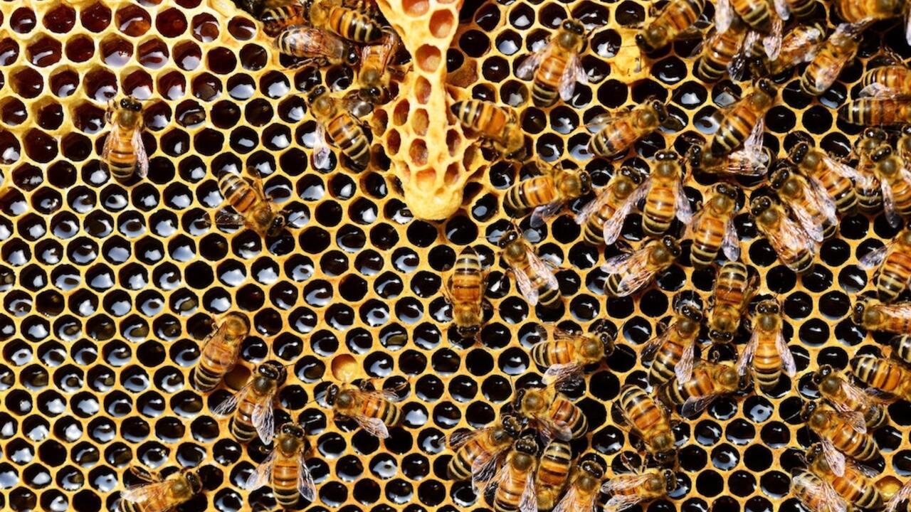 hive of honeybees