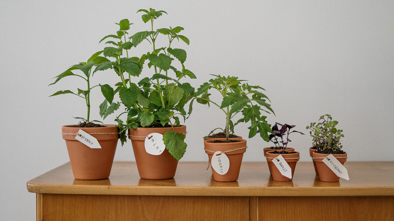 potted herb plants on a wooden table