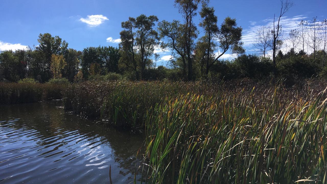 Laurel Creek Conservation park