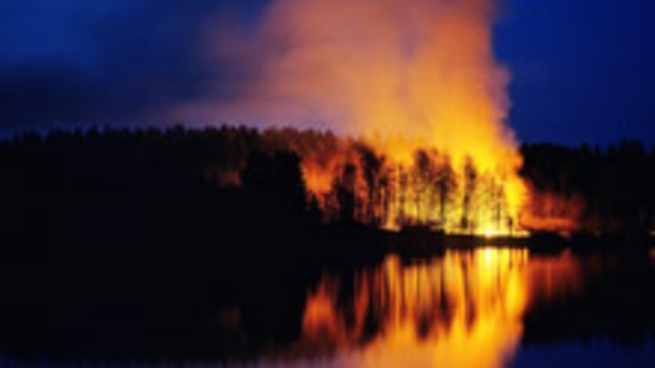 Trees burning in a wildfire