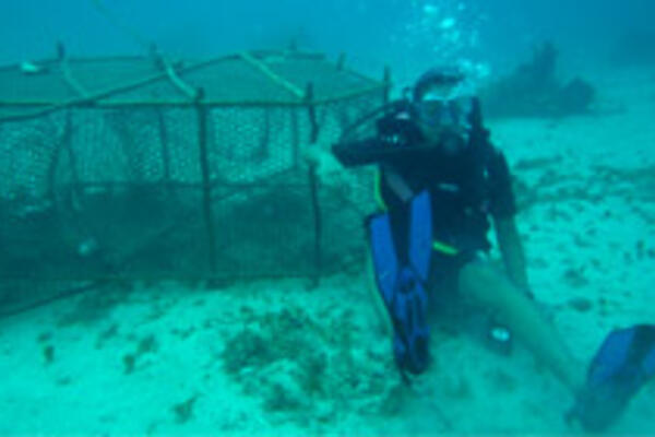 Cheryl Chan scuba diving