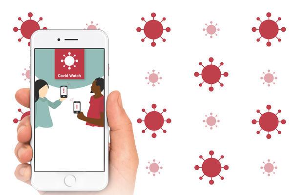 COVID app on phone