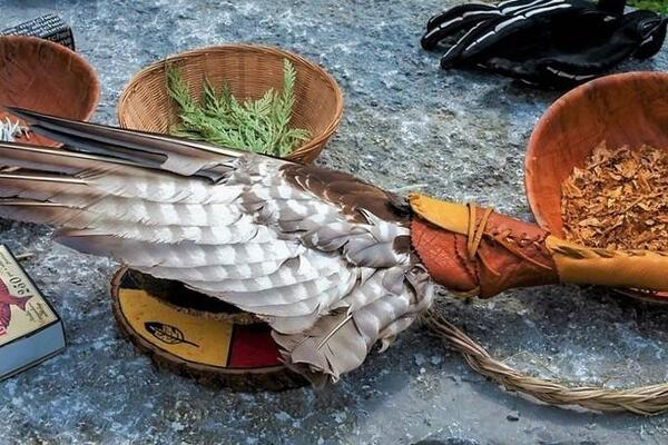 Indigenous ceremonial items including tobacco, cedar bows and eagle feather