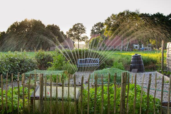 Sprinkler watering a garden