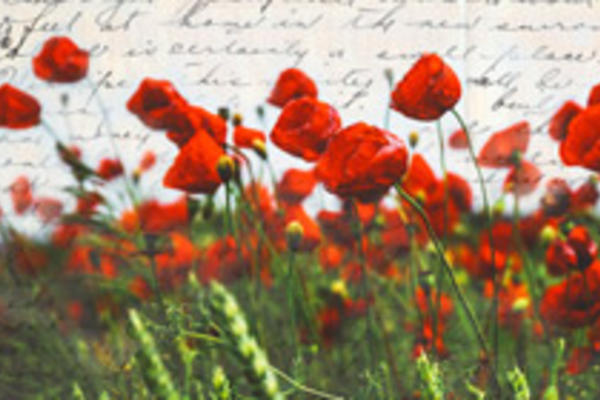 Field of poppies with soldiers letter