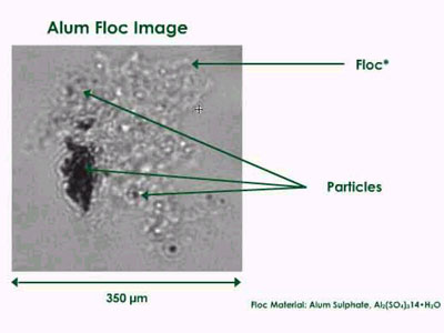 Image of alum floc with particles clearly visible