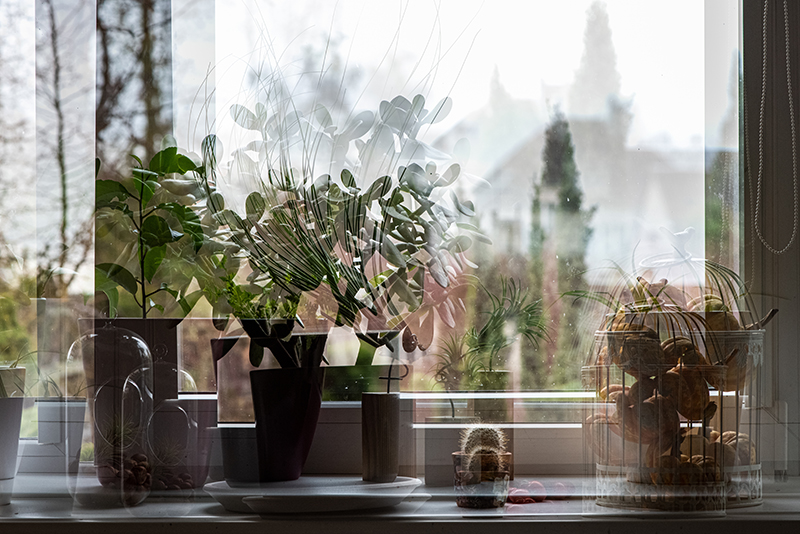 blurry double exposure of windowsill with plants