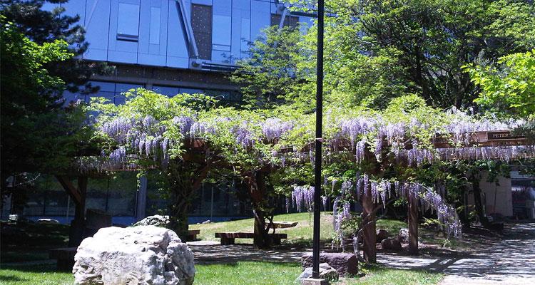 The Peter Russell Rock Garden
