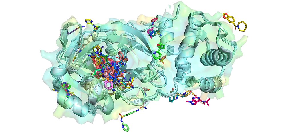 A 3D rendering of several small molecule-bound Mpro structures overlapped over each other