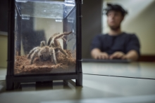studying participant looking a tarantula spider