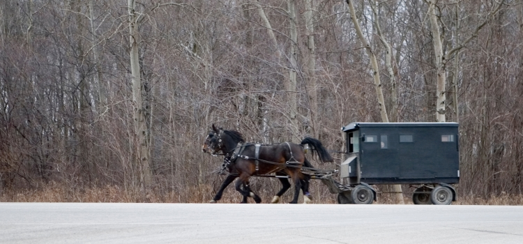Mennonite horse and buggy on road.