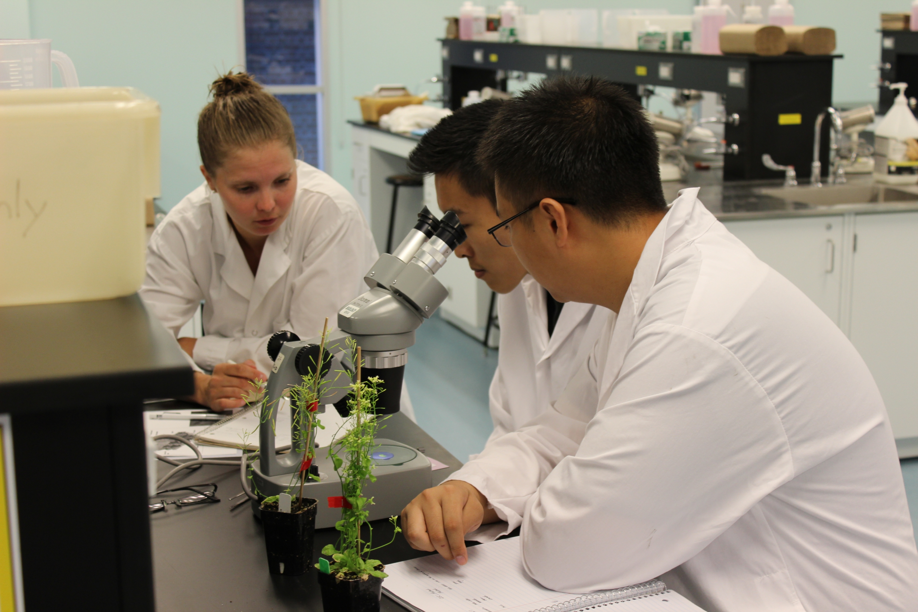 iBASE students studying plants in in the Science Teaching Complex Lab