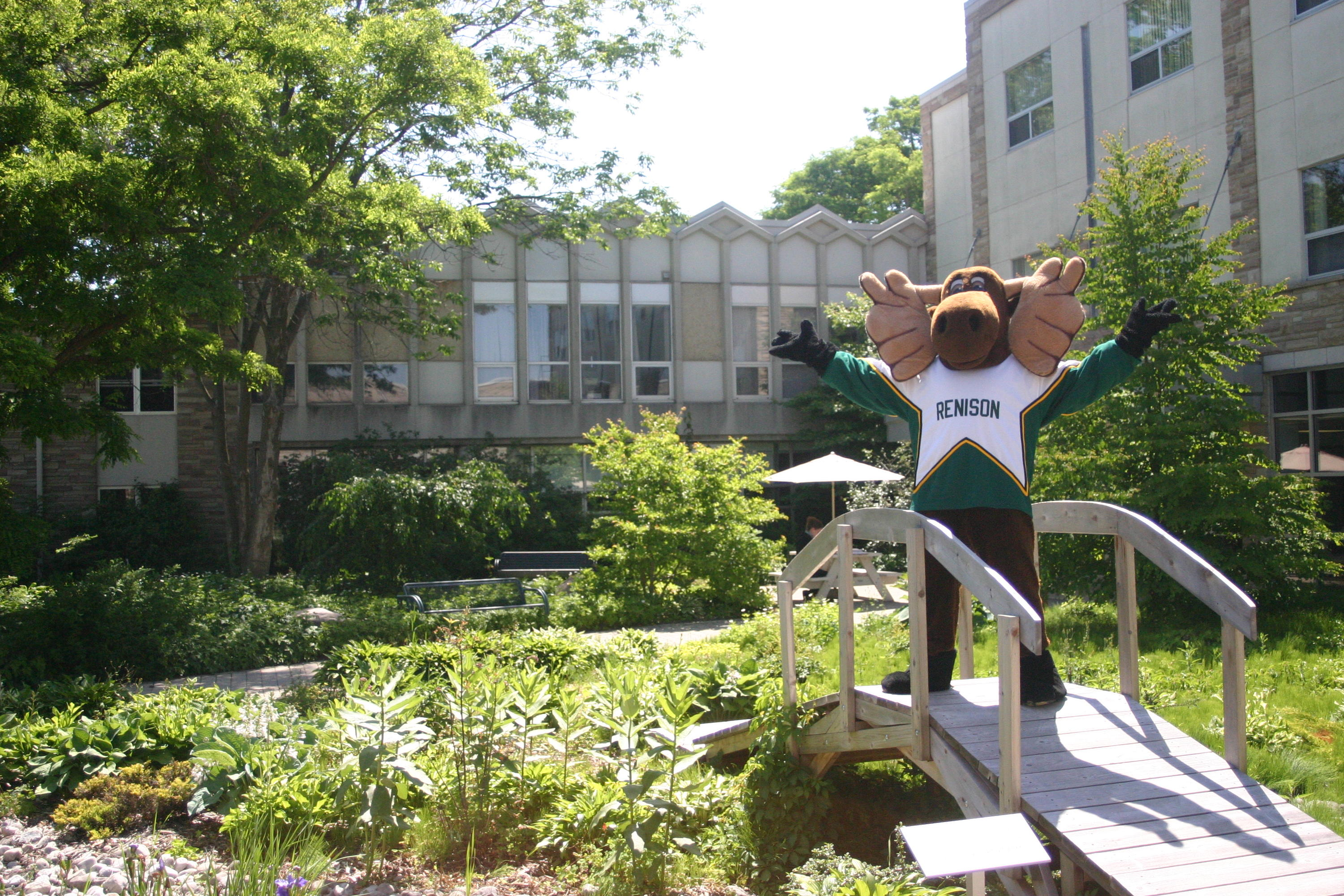 Reni the Moose mascot standing on bridge in Renison courtyard garden