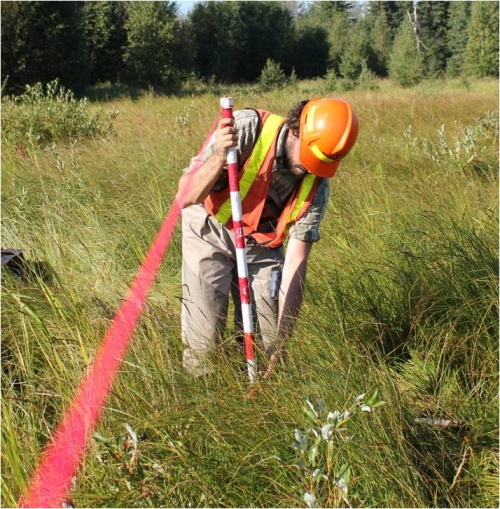 Photo of the Robel pole being used in a wetland to measure above ground biomass