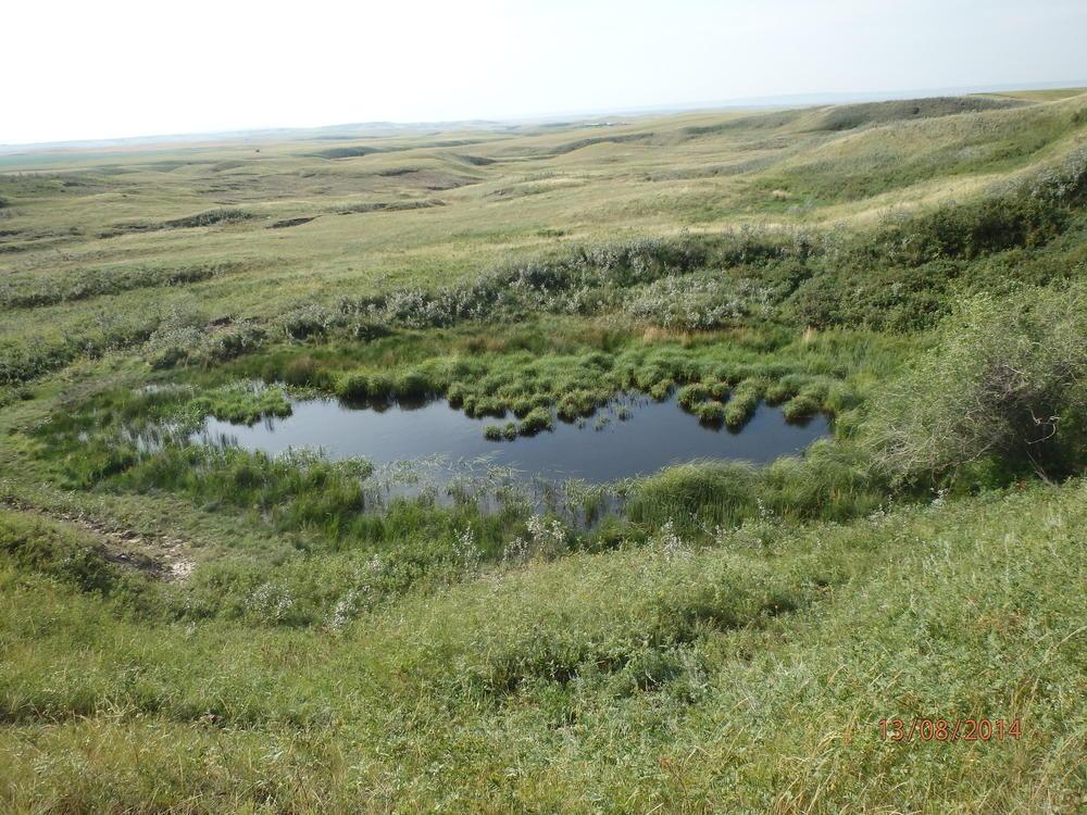 Vegetation zonation pattern around a prairie pothole