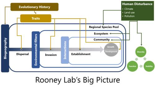 Conceptual model of Rooney Lab Work