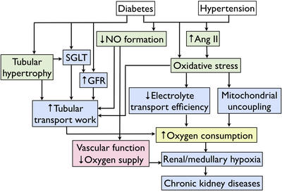 CKD flow chart