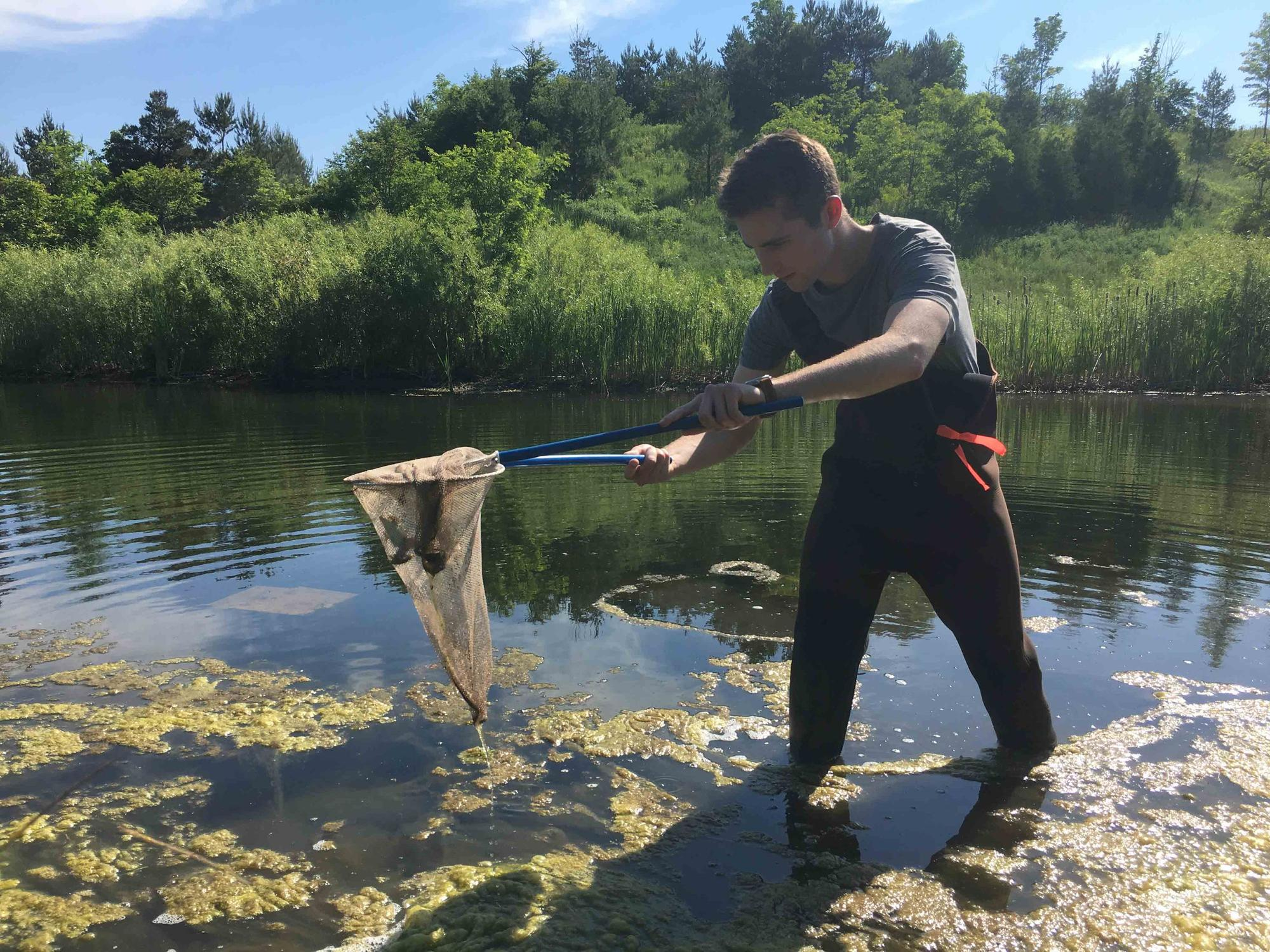 Student catching amphibian with a net