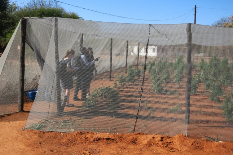 Tomato garden for income generation at Stepping Stones International