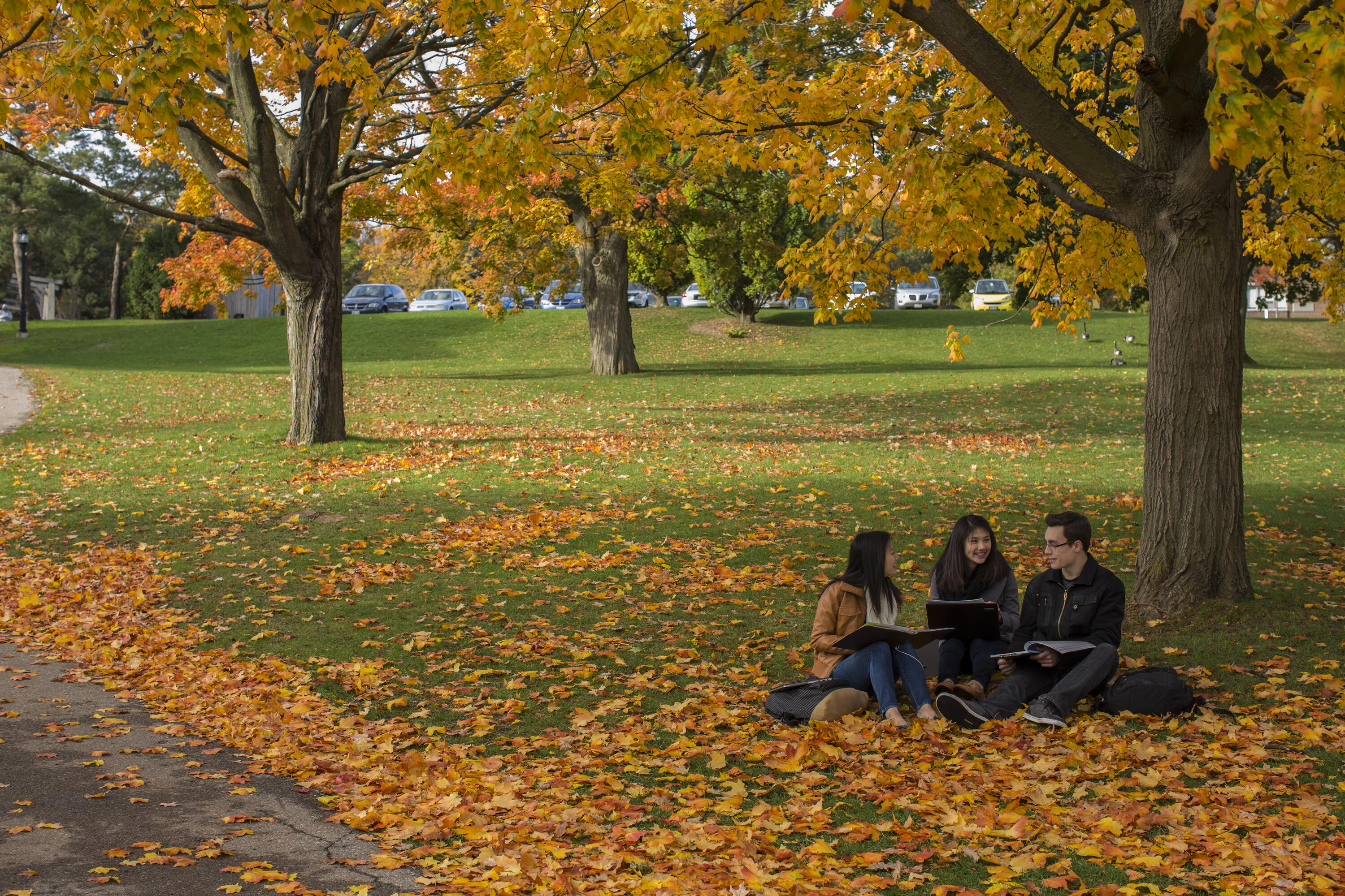 an image of three students sitting undera tree and chatting