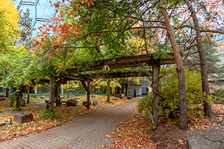 Pathway within UWaterloo campus during fall season