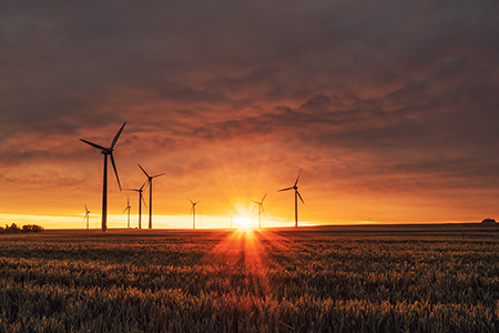 Photo of windmills and field
