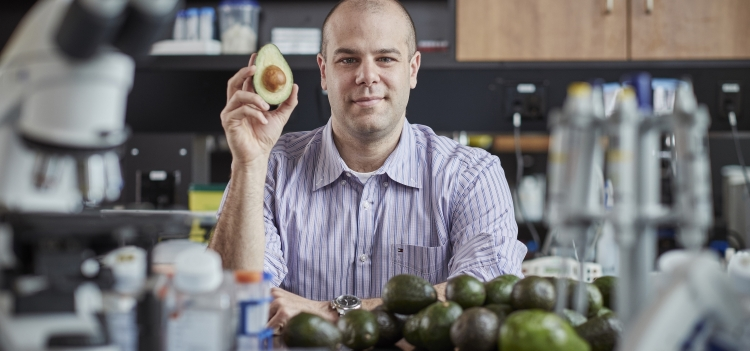 Prof. Paul Spagnuolo holding an avocado in his lab.