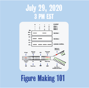 July 29, 2020 3 PM Figure Making 101 with medical illustration or figure