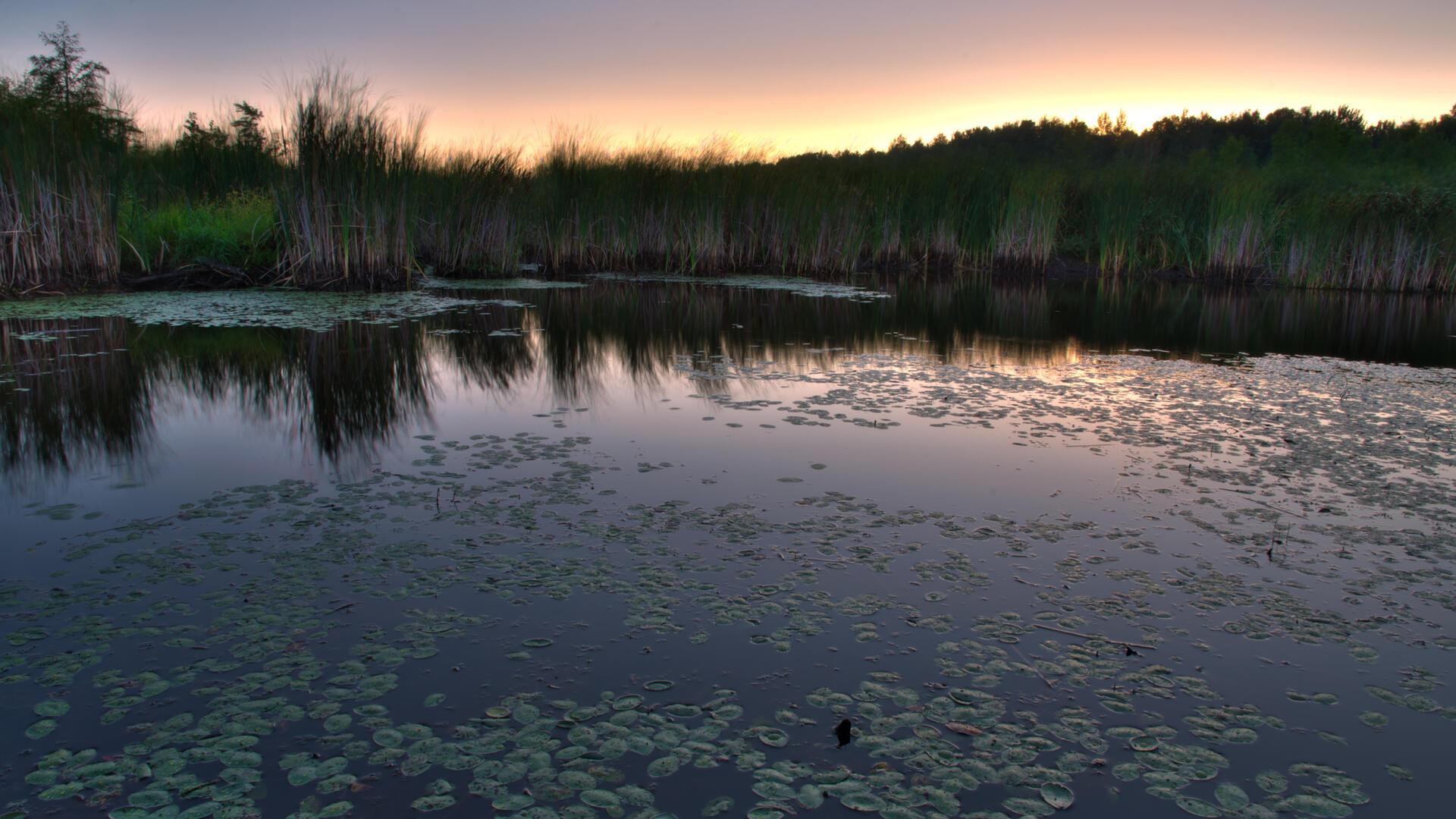 Landscape of MerBleueBog at sunset.