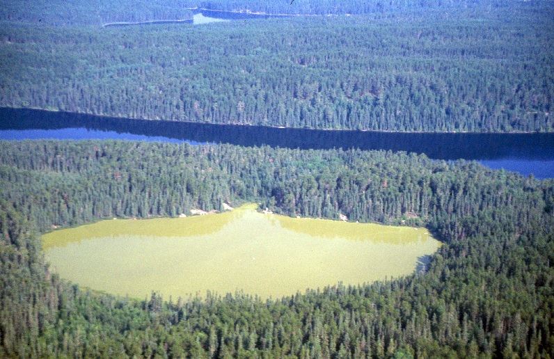 Aerial photo of Lake 227. Photo credit: David O'Connell.