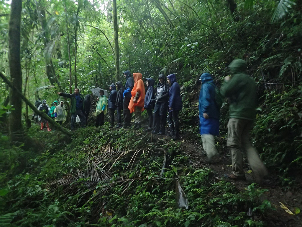 Students hiking through rainforest