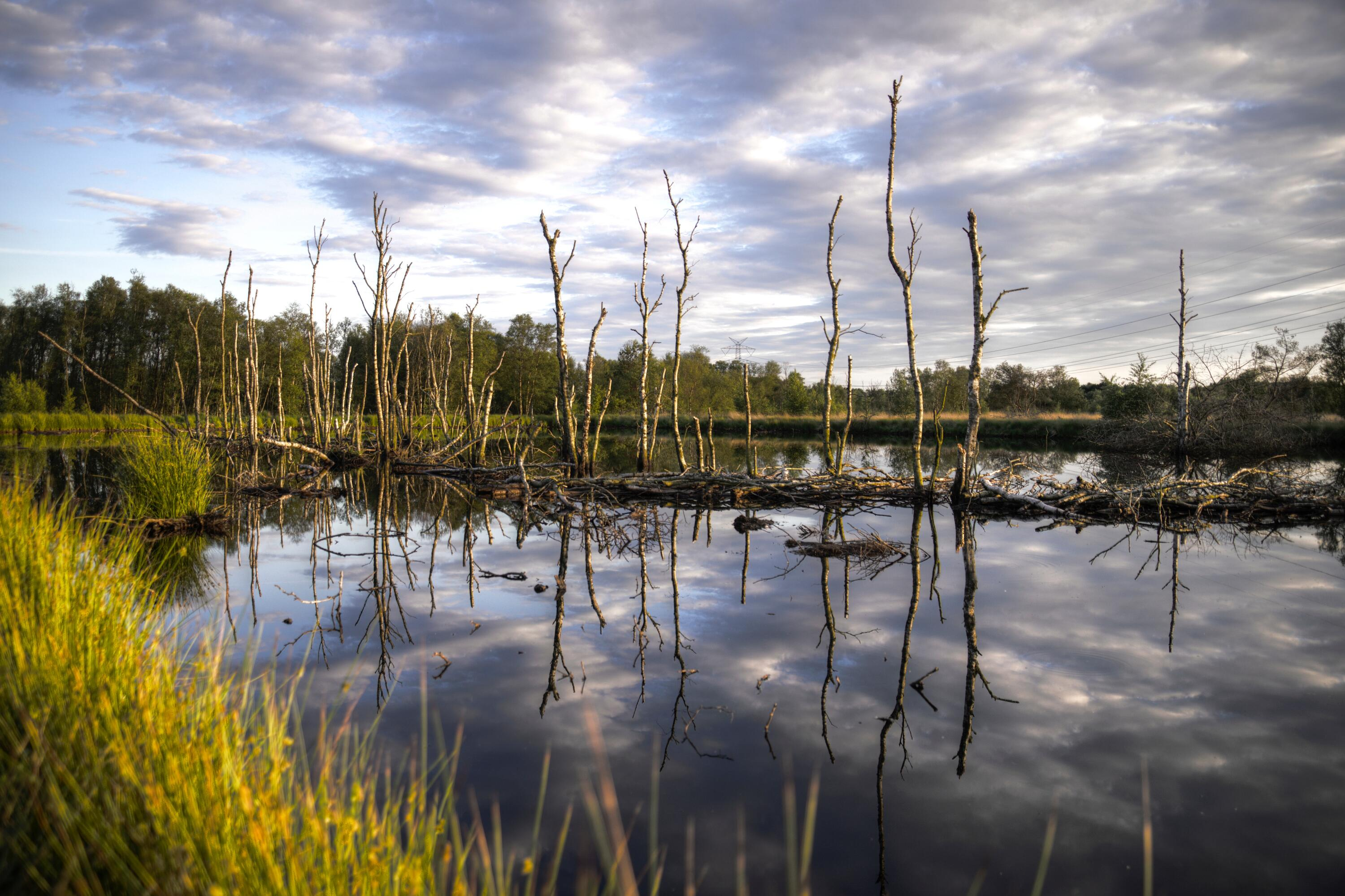 Wetland landscape, including trees growing from shallow water, and green plants along the edge of the wetland