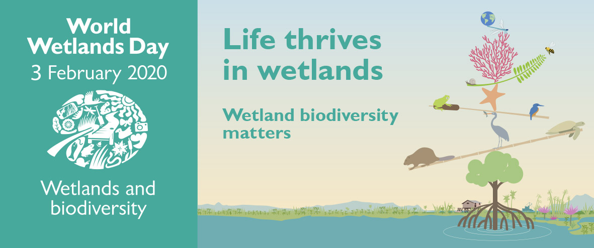 World Wetlands day banner image - life thrives in wetlands. Wetland biodiversity matters.