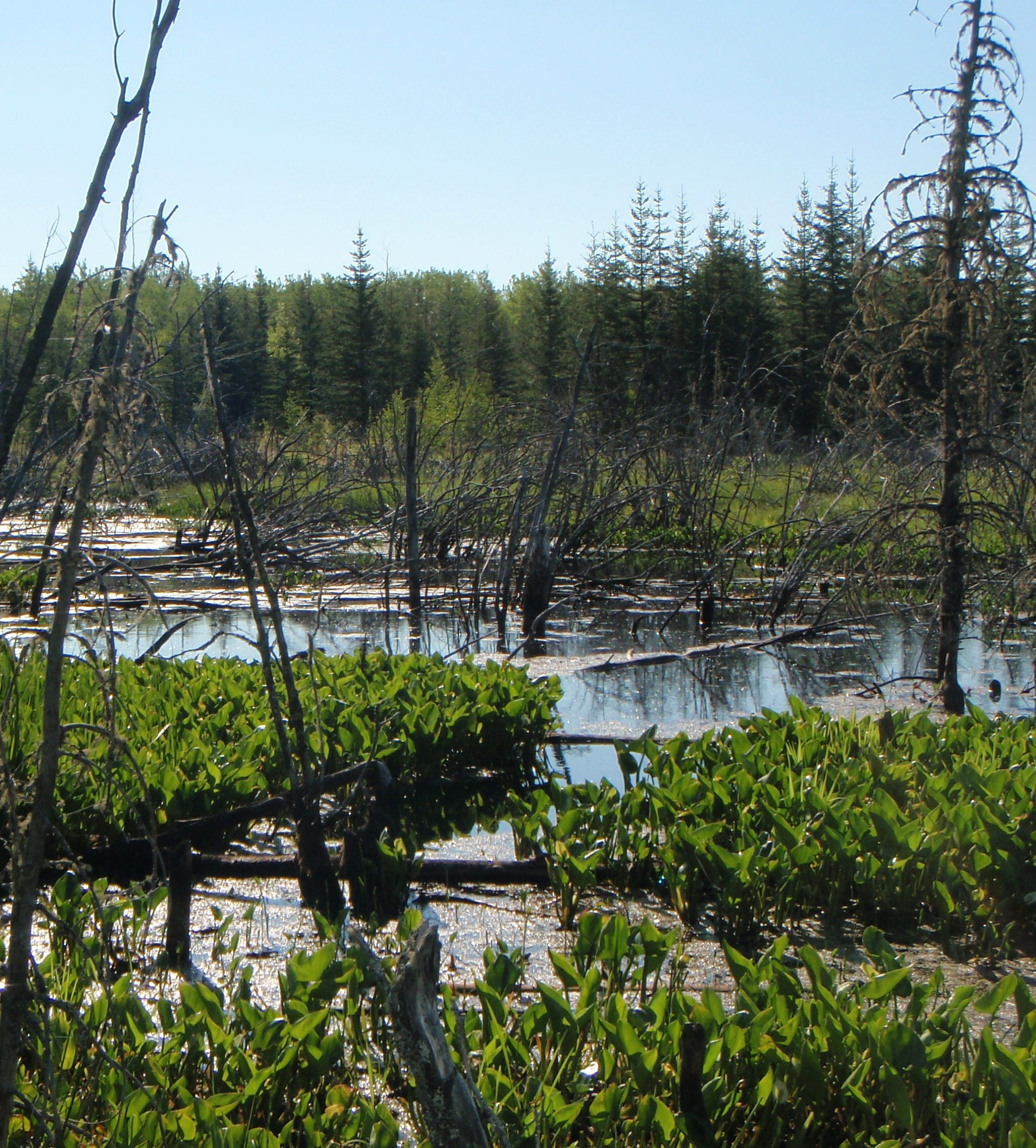 County West Young's Point Wetland, Canada