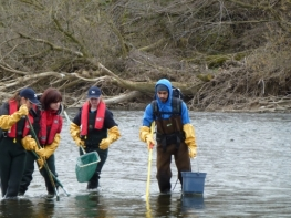 Graduate students electrofishing near a wastewater outfall