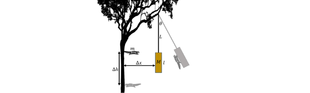 Figure from previous SIN exam; free body diagram of squirrel stuck in a tree.