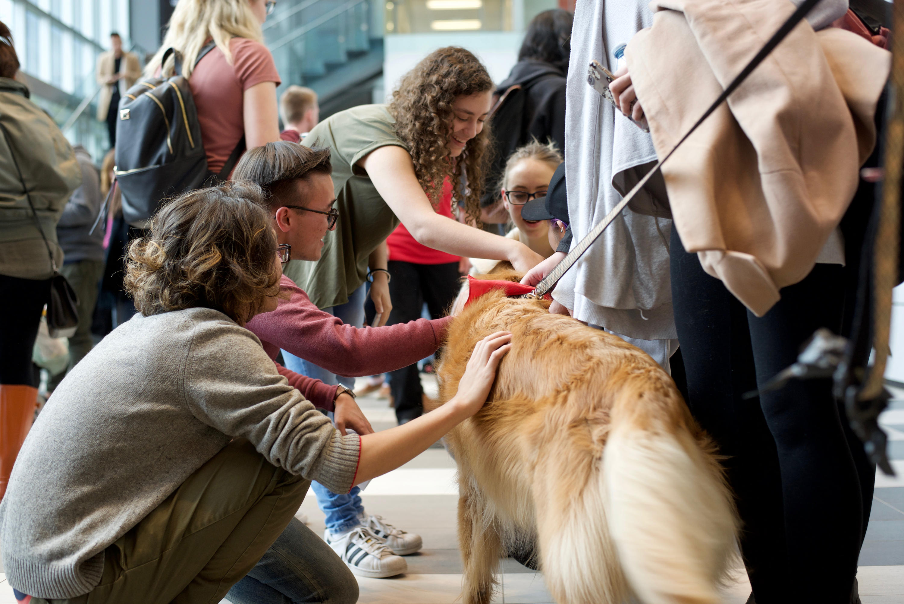 GBDA students with therapy dogs