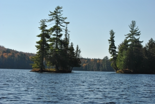 Islands with pine trees on a Muskoka lake.