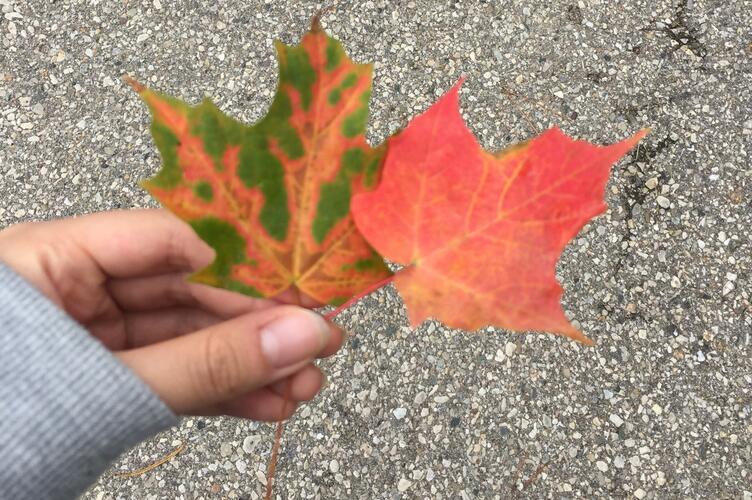 Chriz picking fall leaves.