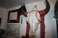 Bison skull hanging in Jesse's office