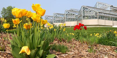 Flower on campus