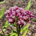 Flower in arts-env garden