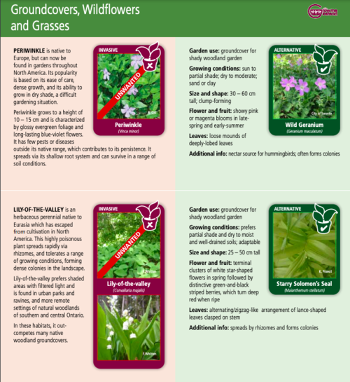 Types of groundcovers, wildflowers and grasses for gardening