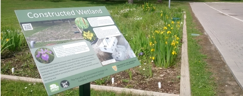 Constructed wetlands with flowers in bloom and informational signage