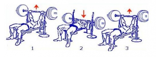 Know More Bench press athletic design ~ Furniture Wood Working
